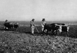 Ploughing in the Plain of Jezreel (c.1925). Image: Bible Archaeology.
